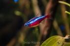 aquarium-2